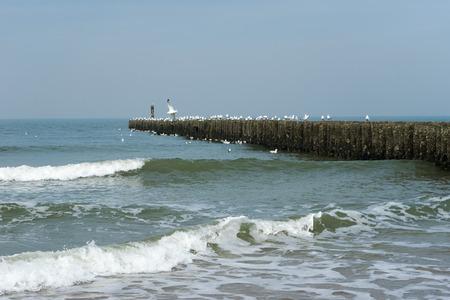 High Tide at Seagull Settlement Netherlands Stock Photo