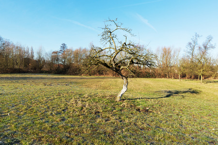 Winterday at Nature Reserve with Lonely Apple Tree Germany Stock Photo