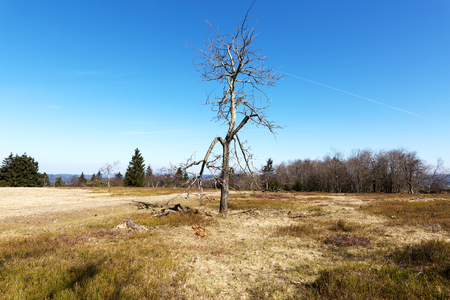 Lonely Tree at Kahler Asten Mountain  Germany Stock Photo