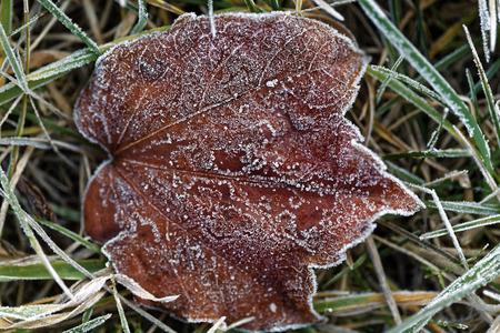 frost winter: Winter frost