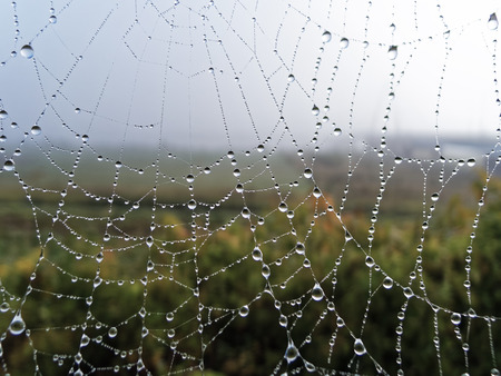 spiders web: Fall caught in the spiders Web Stock Photo