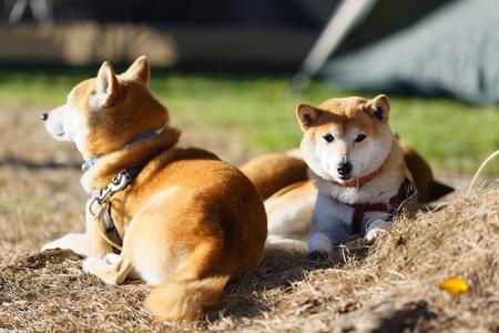 mornings: Campings mornings Stock Photo