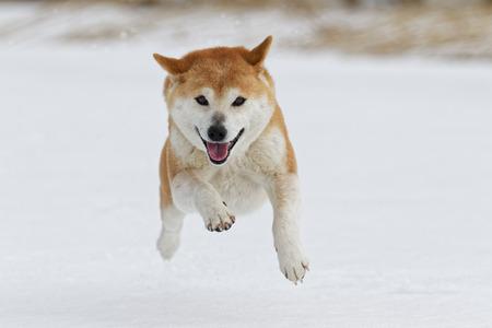 Winter-Hund Standard-Bild - 69838303