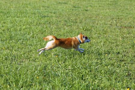 Dog run Stock Photo
