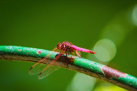 resting: Resting dragonfly Stock Photo