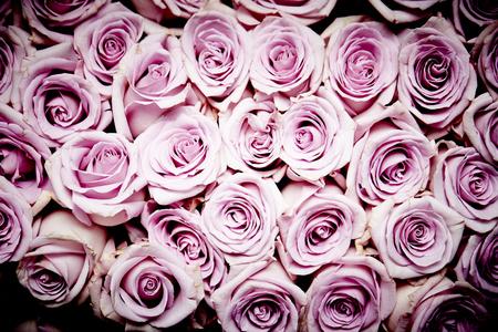 tender tenderness: Roses background