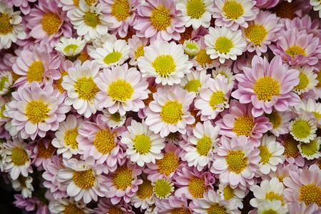 tender tenderness: Flower background