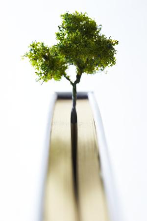 Miniature tree Stock Photo