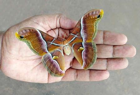 A beautiful moth on a human palm.