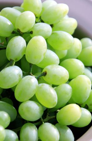 uniquely: Green grapes are a uniquely nourishing, cleansing and regenerative food. Grapes contain astringent tannins that are beneficial in the fight against cancer.