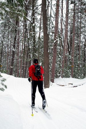Breathtaking nordic skiing trail through Red Pine forest.