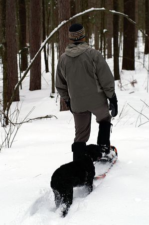 quadruped: Following the leader in deep snow is a smart way to conserve energy when youre a quadruped and dont have snowshoes.  Stock Photo