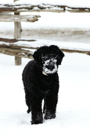 A snout covered in snow. photo
