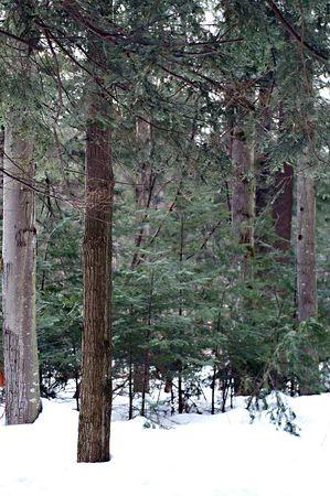springwater: Winter Landscape in Springwater Provincial Park, Ontario