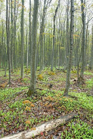 A forest floor in Spring on the Niagara Escarpment, Ontario