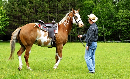 four year old: Horse being exercised in a pasture prior to riding