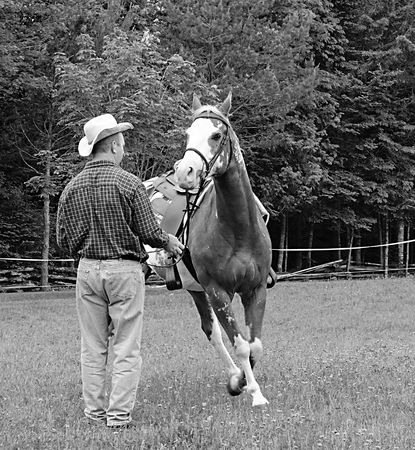 Black and white image of cowboy exercising a horse in a pasture Stock Photo - 3230502