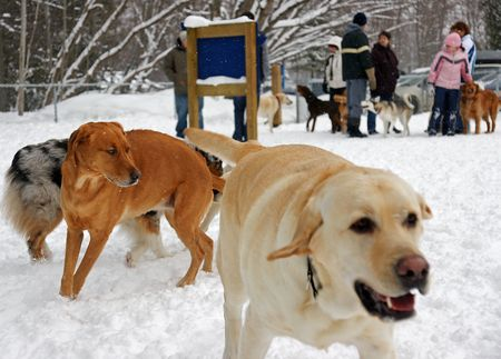 socialization: Sunday Afternoon at the Leash Free Dog Park Stock Photo