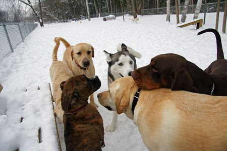 The Leaders of the Pack meet to discuss matters at the Leash Free Dog Park