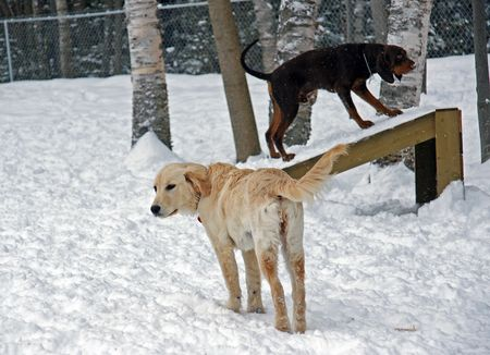 socialization: Checking out the Playground Equipment at the Leash Free Dog Park