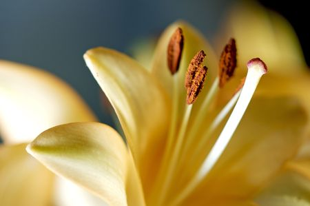 Day Lily focusing on pistil and stamen parts of the flower Imagens