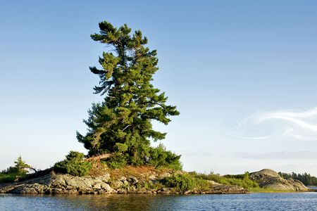 prevailing: A lonely windswept pine tree on a rocky outcrop in Georgian Bay, Canada