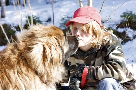 A teenage boy and a Leonberger dog share a touching moment. photo