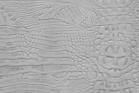 Light grey color animal snake print texture leather background