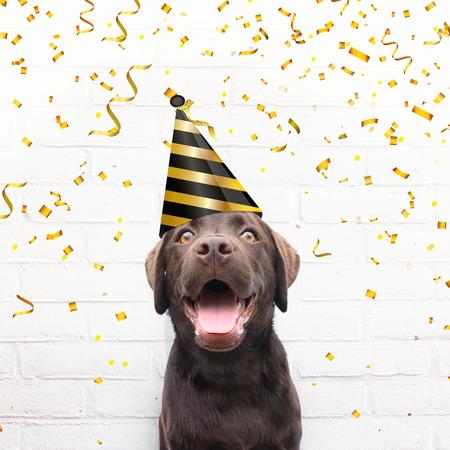 Gelukkige verjaardagskaart gekke hond met feestmuts lacht in de camera tegen witte bakstenen achtergrond met gouden feestconfetti viert zijn verjaardag