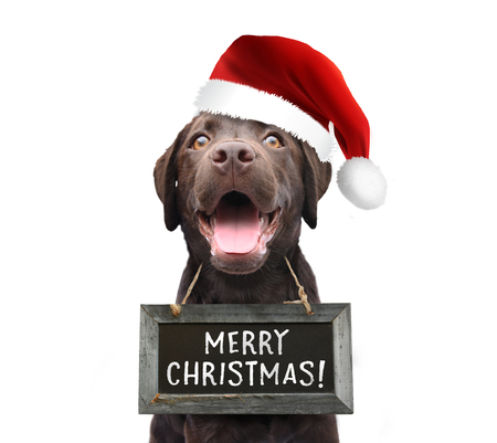 Happy dog pet with santa claus hat wishing you a merry christmas 2018 wearing a sign board with handwritten quote white isolated background