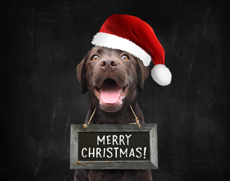 Happy christmas dog with santa hat wishing you a merry christmas wearing a text board with handwritten quote