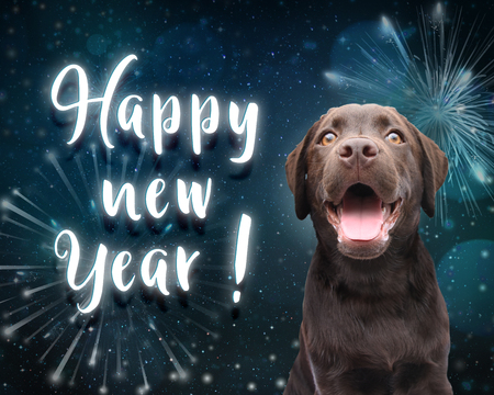 Dog wish you a happy new year for 2019 with dark blue firework background Banco de Imagens