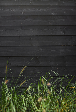 Beautiful nature background green grass against black wooden wall with horizontal planks with space for own text