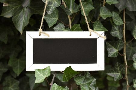 Empty sign board between the green leaves of nature