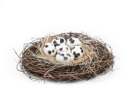 Bird nest with a group of 6 natural spotted eggs Stok Fotoğraf