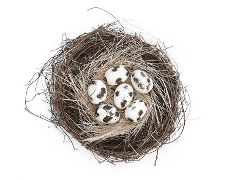 Bird nest with a group of six brown natural easter eggs isolated on white background springtime Banco de Imagens
