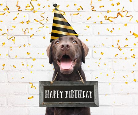Dog with party hat says happy birthday text board around his neck with congratulations quote with golden confetti on white background