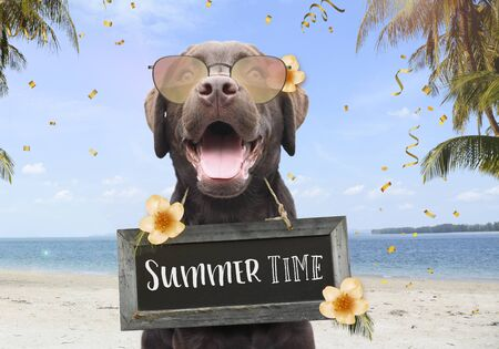 Happy dog on a summer holiday at the beach between palm trees and flowers with text on sign board summer time