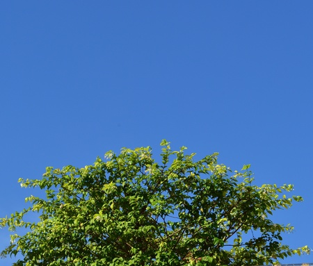 better: Green Tree and blue sky, at daytime, clear sky, means a better environment. Stock Photo