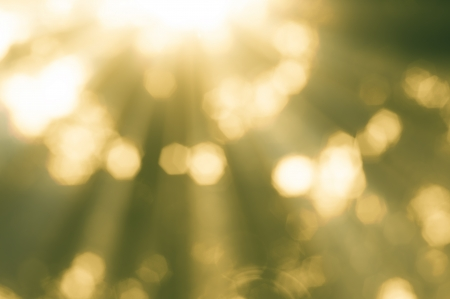 추상적 인 황금 나뭇잎 배경과 햇빛
