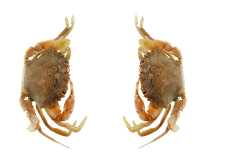 Double steamed crap on white background