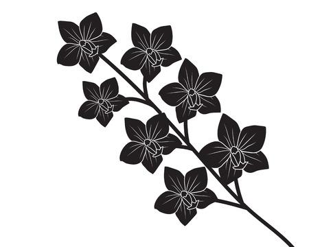 orchidee: Silhouette orchidea su sfondo bianco illustrazione vettoriale