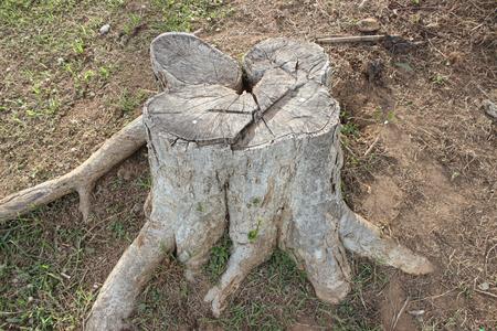 deforestacion: La deforestación