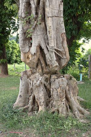 deforestation: The deforestation