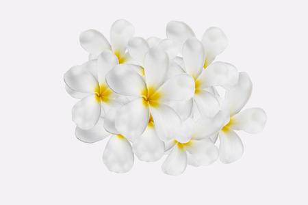plumeria on white background. Stock Photo