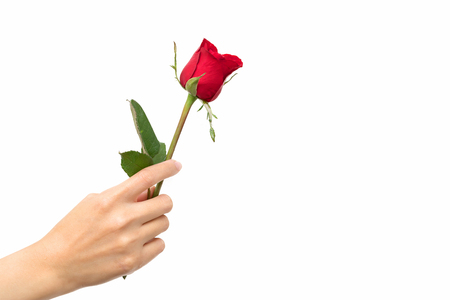 love at first sight: woman hand hold red rose.valentins day concept all in love