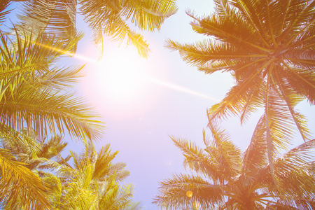 Coconut tree and sky background in warm tone. Stock Photo