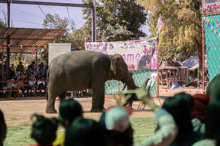 SURIN,THAILAND - JULY 08,2019:The elephant show, drawing elephants at Ban Chang, Ban Tha Tum, Surin, Thailand