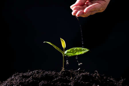 farmers hand are watering seedlings on black background 免版税图像