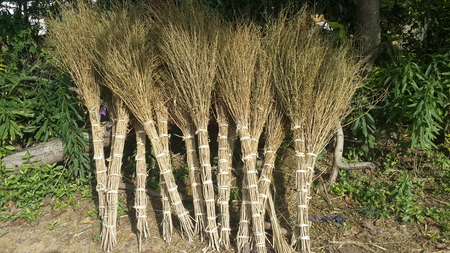 besom: Broom Bush